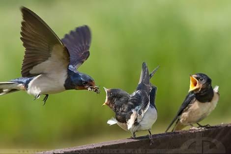 Belajar Hakikat Tawakal dari Seekor Burung