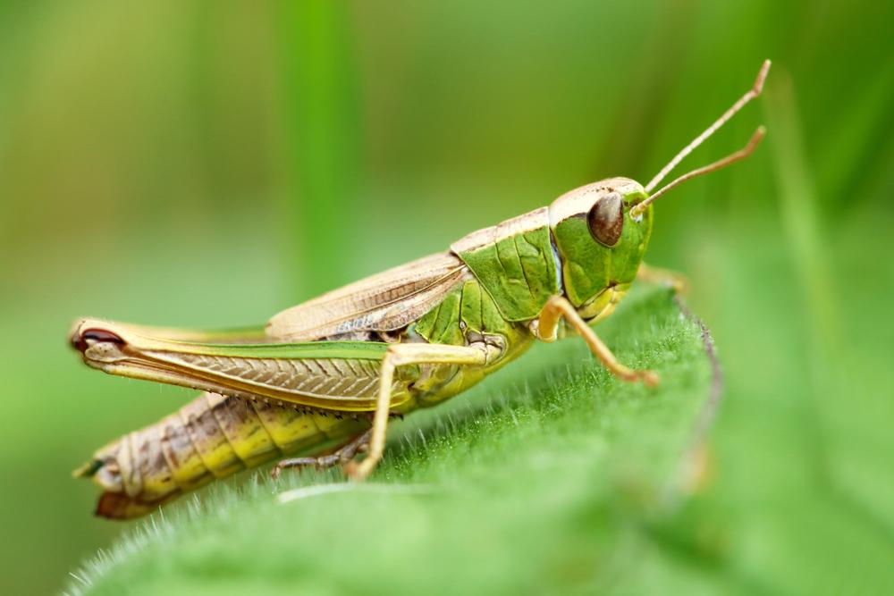 Hukum Membunuh Binatang Serangga