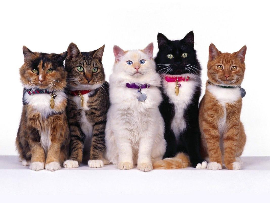 Ini Hukum Jual Beli Kucing Peliharaan